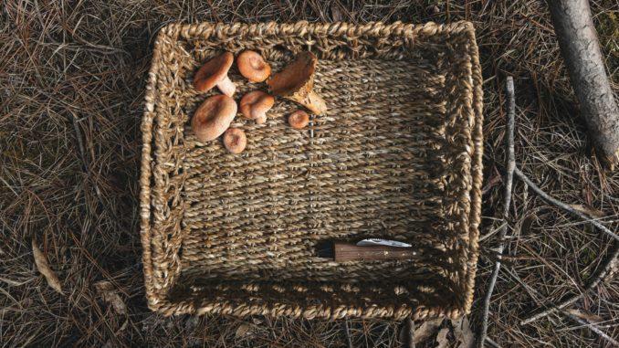 panier à champignons