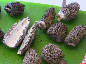 nettoyage de champignons