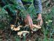 un homme ramasse des champignons